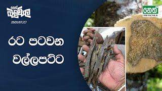 Neth Fm Balumgala  2020-07-27