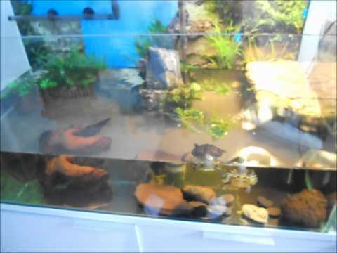 New Turtle Tank - Yellow Bellied Sliders
