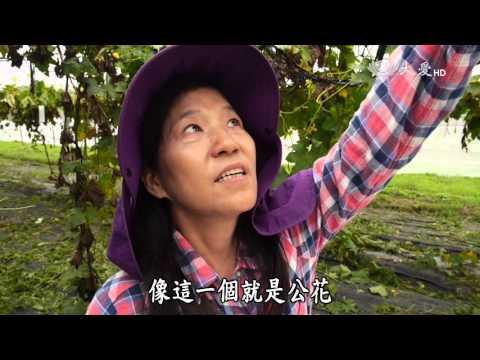 台綜-農夫與他的田-20151207  愛心媽媽的健康田
