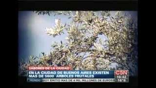 Buscando y utilizando los árboles frutales públicos de la ciudad (C5N)
