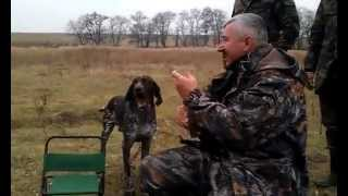 The best dog for hunting )