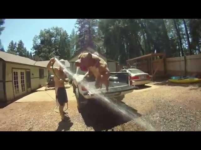 Extreme pitbulls Bossykennels.com