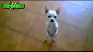 Videos Graciosos Con Animales, Perros, Gatos, Golpes, Peleas Y Caidas Chistosas 2015