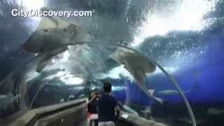 City Discovery in Singapore - Underwater world