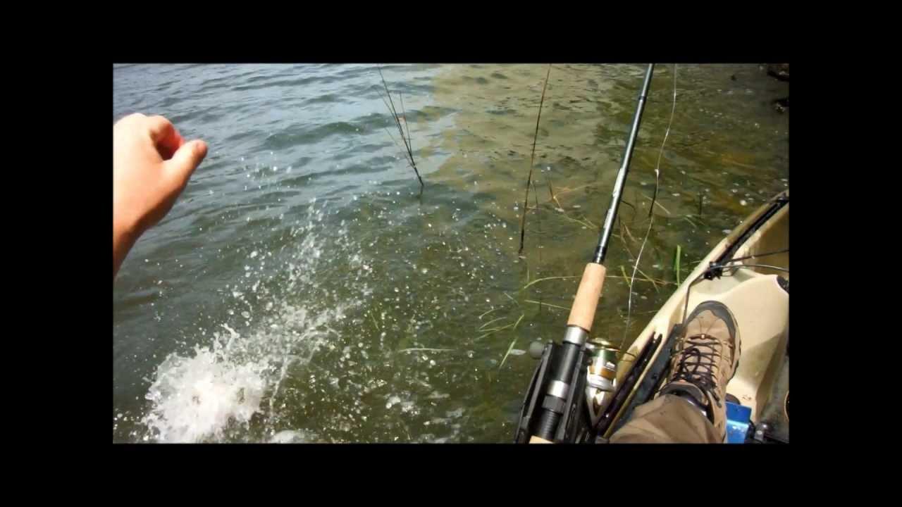 Owl creek rudee inlet virginia beach kayak fishing for Rudee inlet fishing report