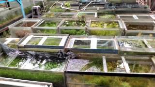 Trại Thủy Sinh Bình Thạnh video 2