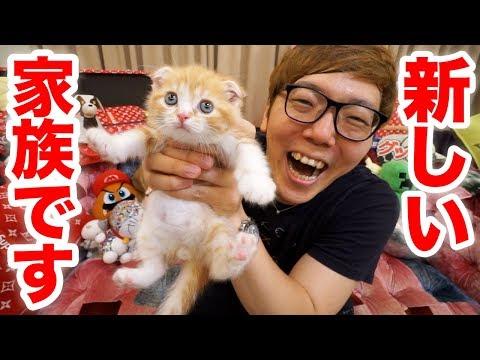 【悲報】ヒカキンさん、子猫を買ってしまう