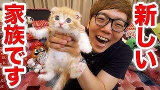【ご報告】家族が増えました!猫飼います!【ヒカキンTV】【ねこ  cat】