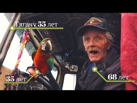 Старик - дальнобойщик с попугаем на старом траке