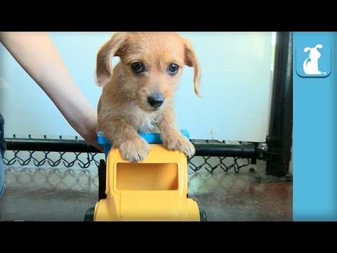 Puppies Ride In A Truck, Receives Class C Driver's License - Puppy Love
