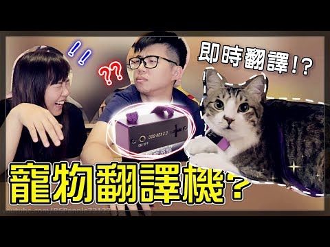 【魚乾】狗語翻譯機貓咪到底能不能用?難道又是詐騙?