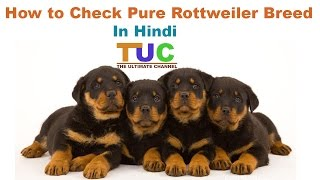 How to Check Pure Rottweiler Breed In Hindi | Know Your Breed In hindi | The Ultimate Channel