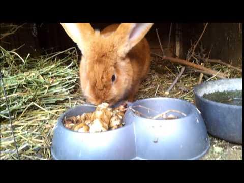 Самообеспечение. №6. Разведение кроликов без зерна.