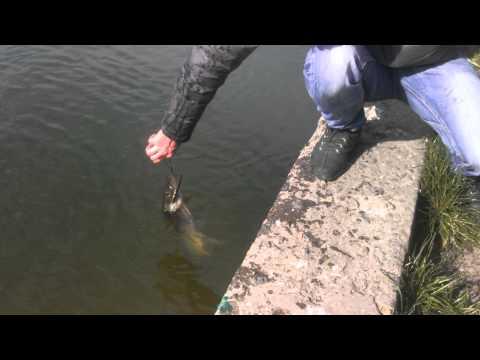 платная рыбалка в одессе