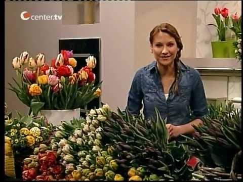 Tulpen-Special Mit Tipps Rund Um Die Tulpe