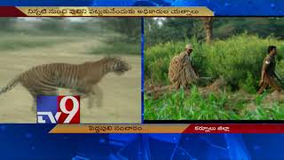 Tiger fear haunts Kurnool village