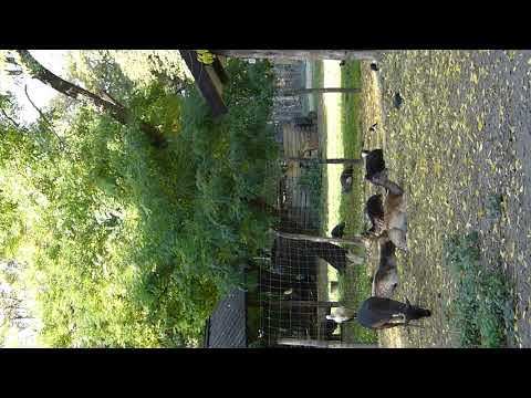 Margit island zoo 2.