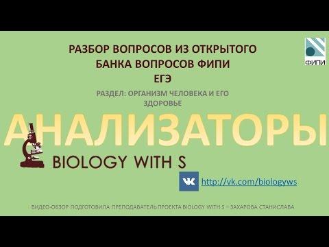 Промо разбор вопросов ФИПИ  ЕГЭ  Анализаторы от проекта Biology with S