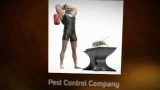 [Graham's Pest Control Service (972) 656-4316] Video