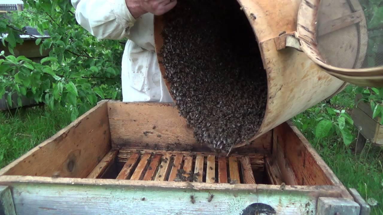 Как сажать пчел в новый улей 14