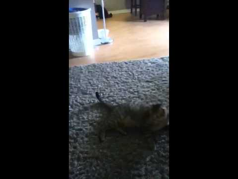 Funny cats part 3
