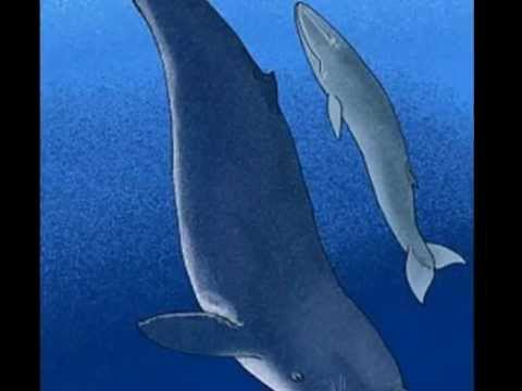 Leviathan Melvillei - YouTube