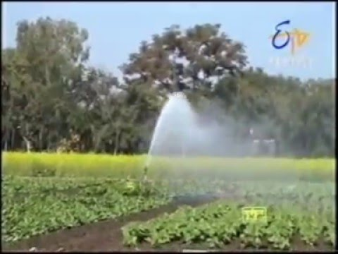 Raingun Vedant Irrigation Agriculture Sprinkler India (Skipper Mariner)