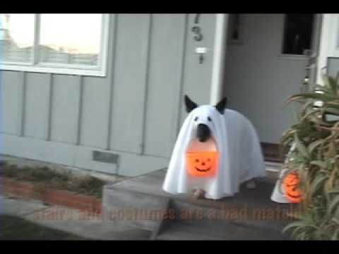 Best Halloween Pets in costume!