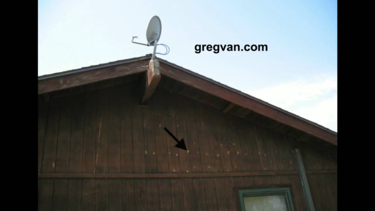 Plywood siding and wood filler tips paint stains or