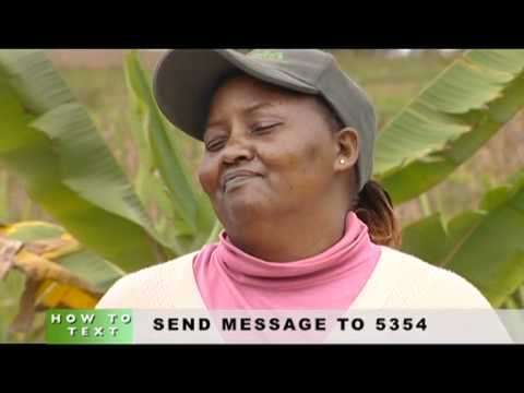 Shamba Shape Up - Maize For Your Area Thumbnail