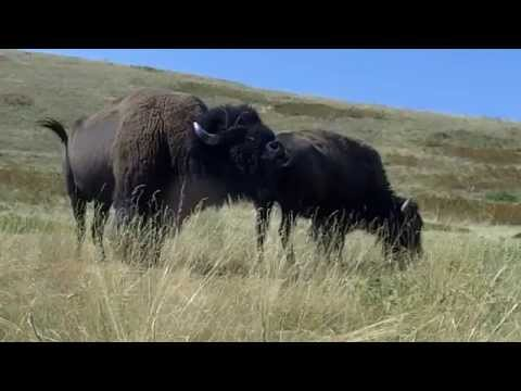 Download Giant Donkeys Mating Deep Video to 3gp, Mp4, Mp3 - LOADTOP ...