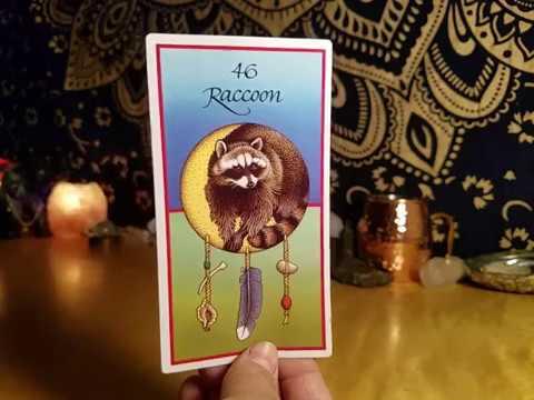 TWIN FLAME Message ANIMAL SPIRIT RACCOON....... (JUNE 18TH)