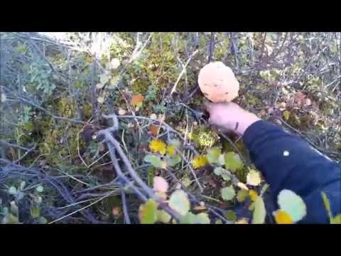 охота и рыбалка в воркуте видео