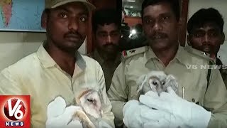 Forest Officials Clarifies Over Mysterious Birds In Vizag Says Its Barn Owls