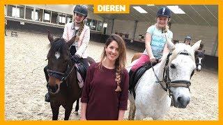 'Veel paarden in de manege hebben stress'