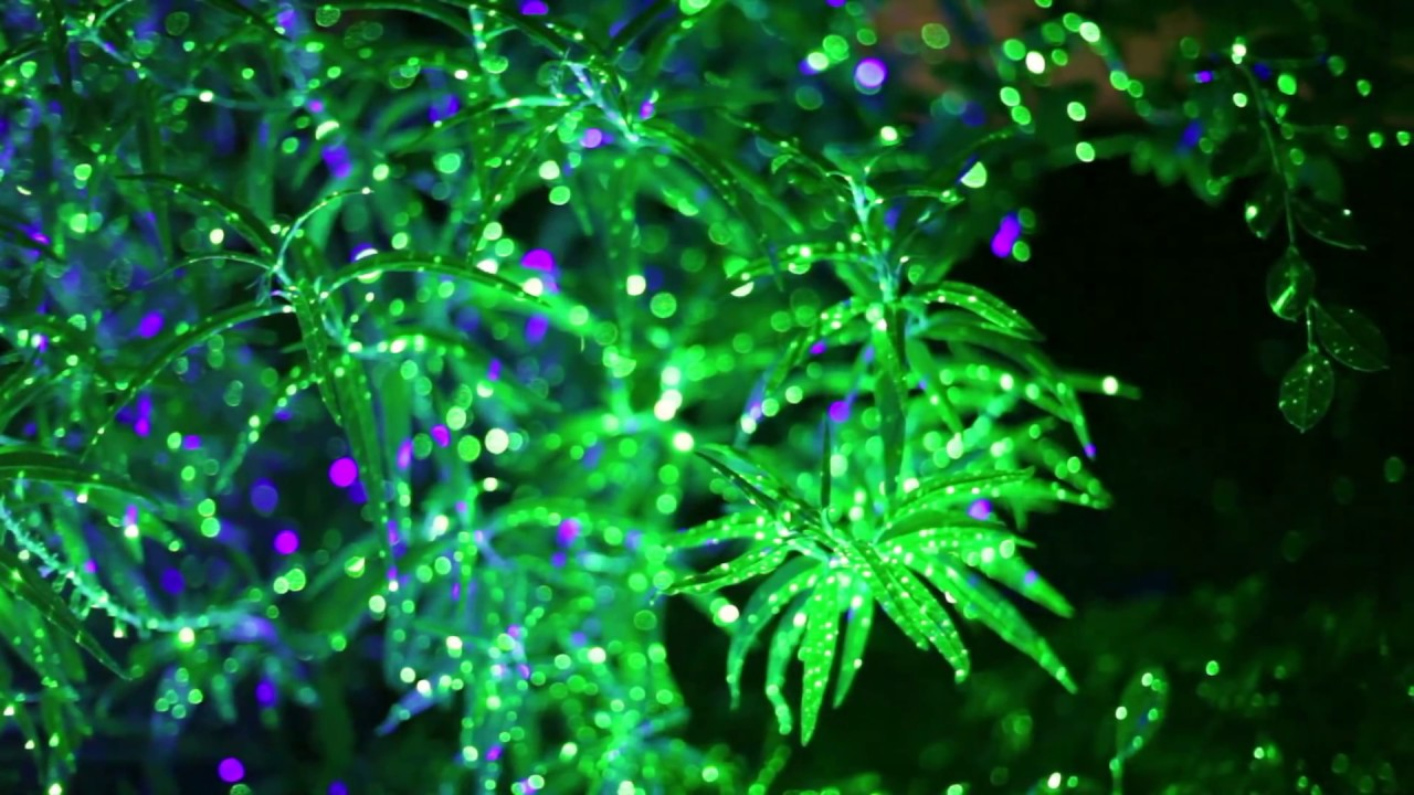 blisslights blue and green youtube