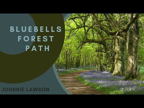 8 hour Nature Sounds-Relaxation-Meditation-Birdsong-Birds Singing-Forest Sounds