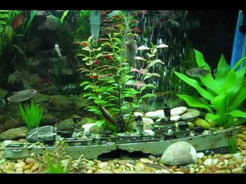Community fish tank 20 gallon fresh water aquarium youtube for Freshwater fish for 20 gallon tank