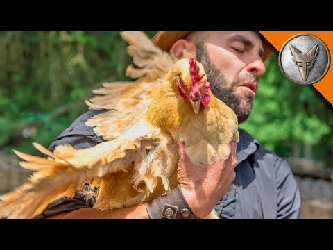 WING'ED by a CHICKEN!
