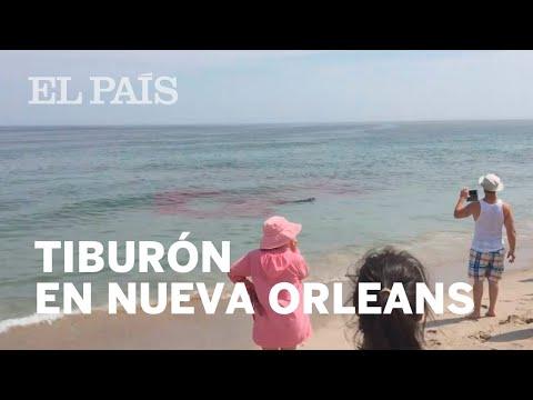 Un tiburón ataca a un león marino en una playa de Nueva Orleans | Viral