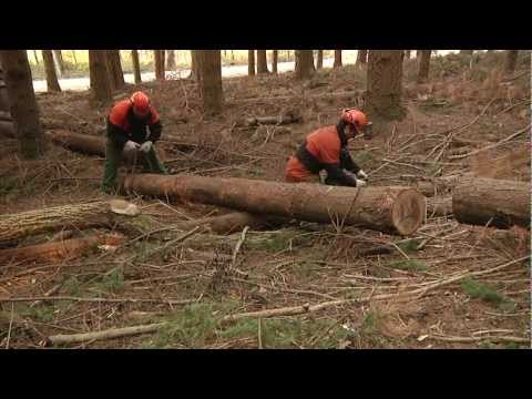 SICUREZZA e SALUTE nei CANTIERI FORESTALI (video completo)