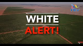 #WhiteAlert: Aflatoxin - the poison in maize flour wiping out families