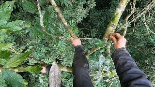 Journey to trap birds on tree tops, episode 3,  traps on the tree tops
