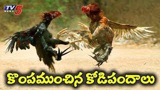 పండగ సంప్రదాయం ముసుగులో పక్క జూదం..! | Sankranti 2019