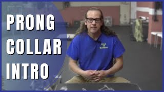 Intro to prong collars How to Dog Training Solid K9 Training