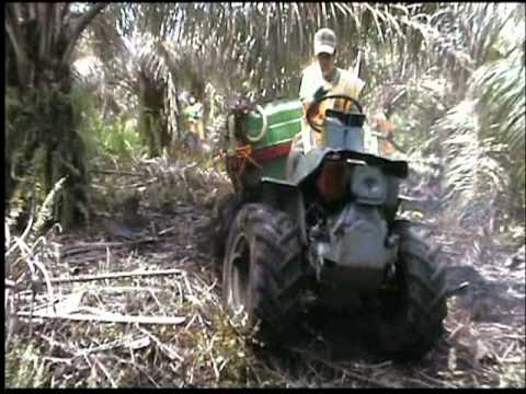 Erreppi Buffalo - In-Field Pest-Control Spraying - Palm Oil Plantation