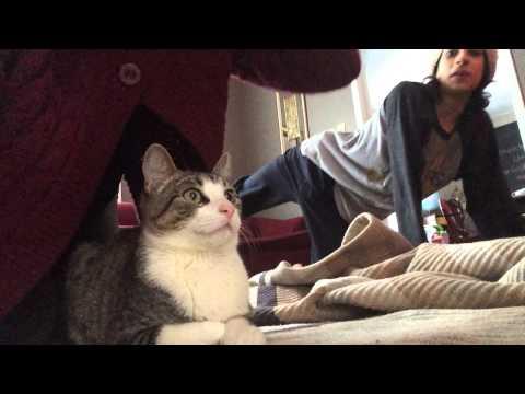 DDP Yoga Cat Arch