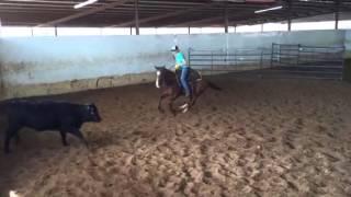 Flint- Jared Lesh cowhorses