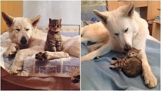 Homeless kitten chooses out her a new surrogate dad and a new family
