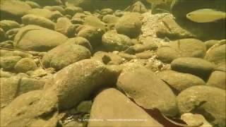 Underwater of Bichoro river Mongagua SP, Brazil 29 1 2019 Antonio Silveira